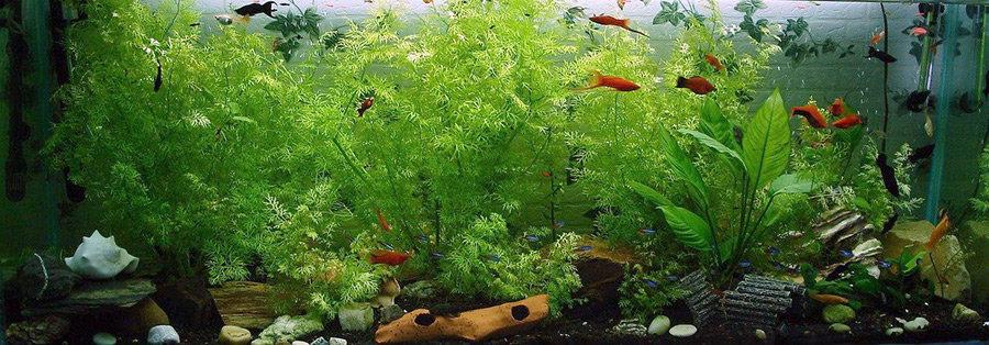 Geniessen Sie die schwimmenden Fische, nach dem Umzug mit dem Aquarium.